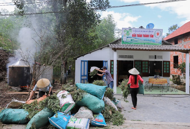 Nghề nấu dầu tràm ở xứ Huế